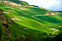 Mosel Valley Hillside