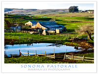 Sonoma Barn, New Year's Day