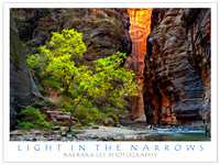 Light in the Narrows