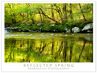 Reflected Spring