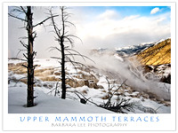 Upper Terraces, Mammoth Hot Springs