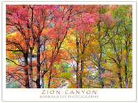Zion Canyon Maple and Cottonwood