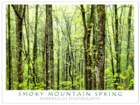 Smoky Mountain Spring