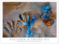 Raccoon Tracks and Fallen Leaf on Swamp Oil Creek - Zion National Park